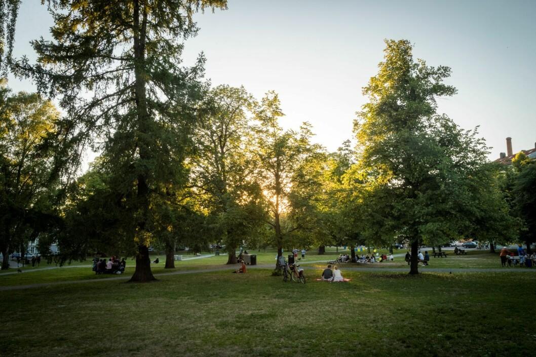 En ung tenåring er tiltalt for å ha voldtatt en kvinne i 40-årene i Sofienbergparken natt til torsdag 3. mai i fjor. Arkivfoto: Heiko Junge / NTB scanpix