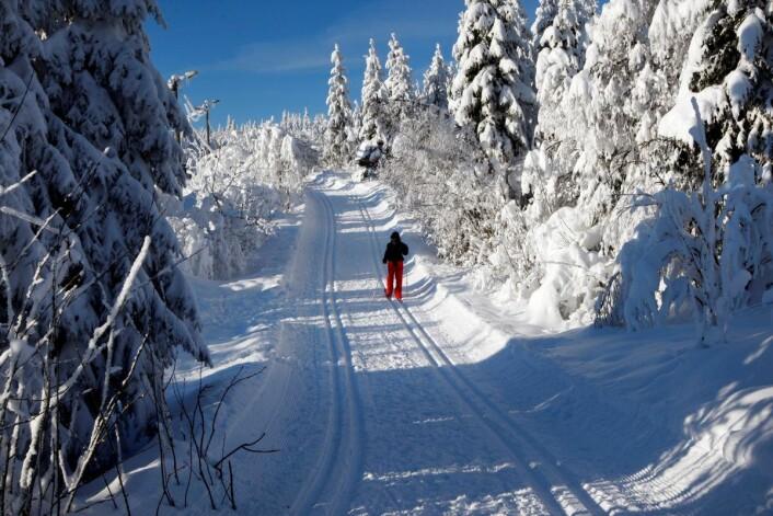 Det er nok en stund til det blir så idyllisk i Nordmarka. I mellomtiden kan folk bruke den forbedrede lysløypa med kunstsnø fra skistadion i Kollen og via Midtstua. Foto: Lise Åserud / SCANPIX