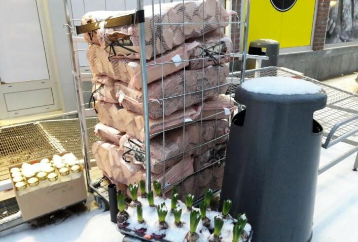 Mange dagligvarebutikker tilbyr bjerkeved til frosne kunder. Foto: Anders Høilund