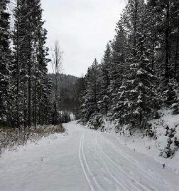 Fortsatt er det litt lite og for løs snø til at det kan prepareres med løypemaskiner, beretter bymiljøetaten på Facebook. Foto: Atle Rømo