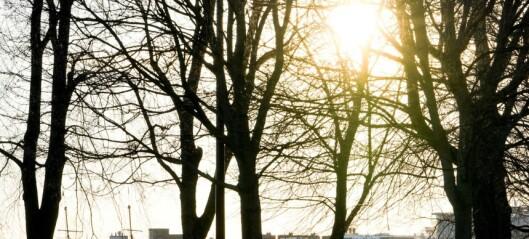 Oslo vil plante 100.000 trær innen 2030