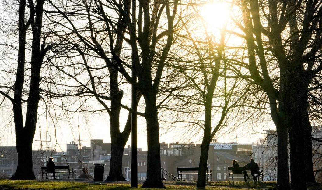 Bymiljøetaten vil plante 100.000 nye trær i Oslo innen 2030. Foto: Fredrik Hagen / NTB scanpix