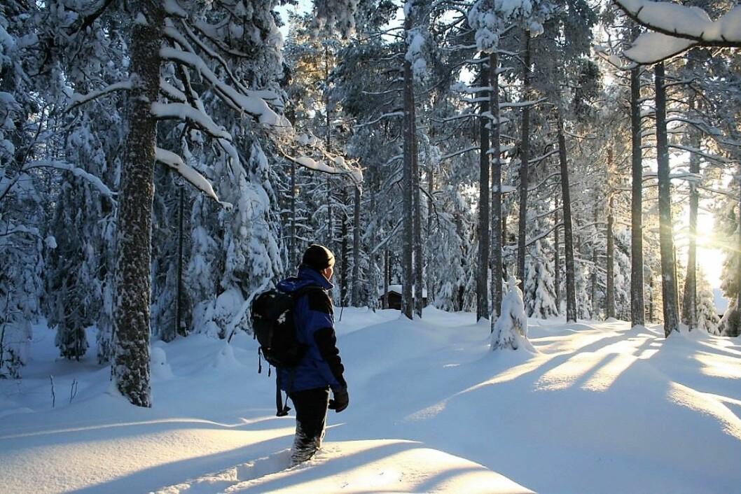Mot lyset i Østmarka. Foto: Steinar Saghaug