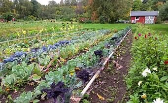 — Urbant landbruk må bli mye mer tilgjengelig for alle i Oslo