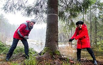 Den tradisjonelle julegrana fra Oslo til London ble felt på Grønmo