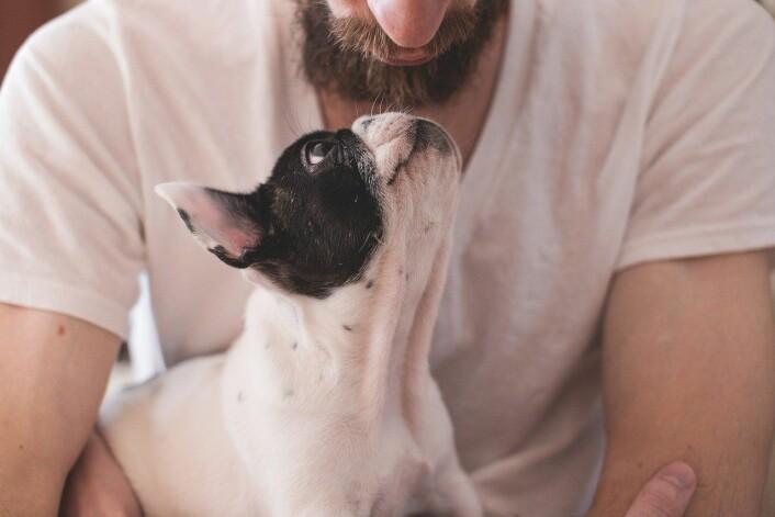 Hund og hundeeier i skjønn forening. Foto: Pixabay