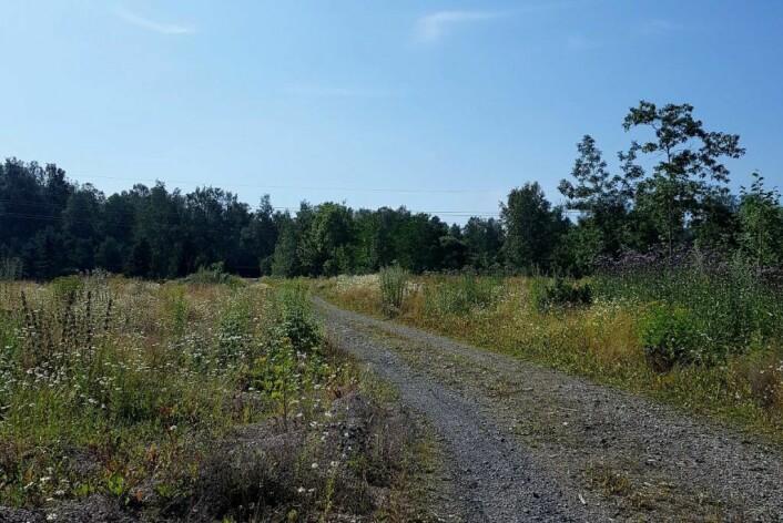 Det er frodig på Engebråten på sommeren. Her vil det gro godt. Foto: Alette Elvenes