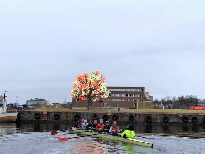 Det er mye spennende å se på langs Oslo havn for roerne, inkludert Stein Erik Hagens bokstavelig talt lysende tre på Filipstad. Foto: Hans Magnus Borge
