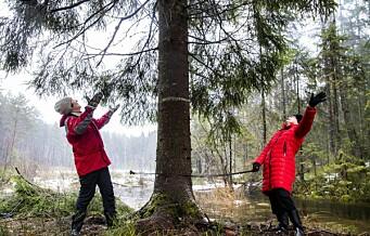 – Hvorfor må det for enhver pris hete nasjonalpark i Østmarka?