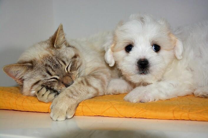 Hunde- og katteeiere bær ta ekstra hensyn til sine firebente på nyttårsaften. Illustrasjonsfoto: Pixabay