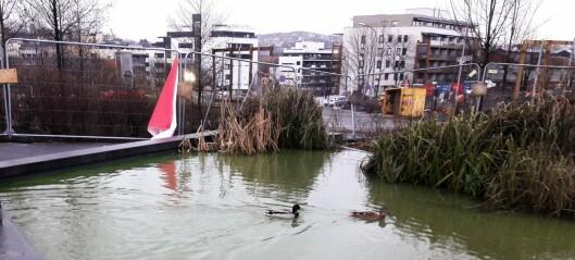Hvorfor har vannet i Hovinbekken plutselig blitt farget grønt?