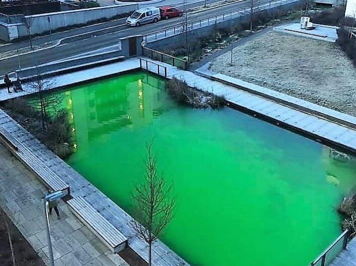 """Dammen i Stålverkskroken fikk en sterk grønnfarge mandag. Tirsdag skal vann- og avløpsetaten lete videre etter en mulig lekkasje fra Hovinbekken. Foto: <a href=""""mailto:tips@vartoslo.no"""">tips@vartoslo.no</a>"""