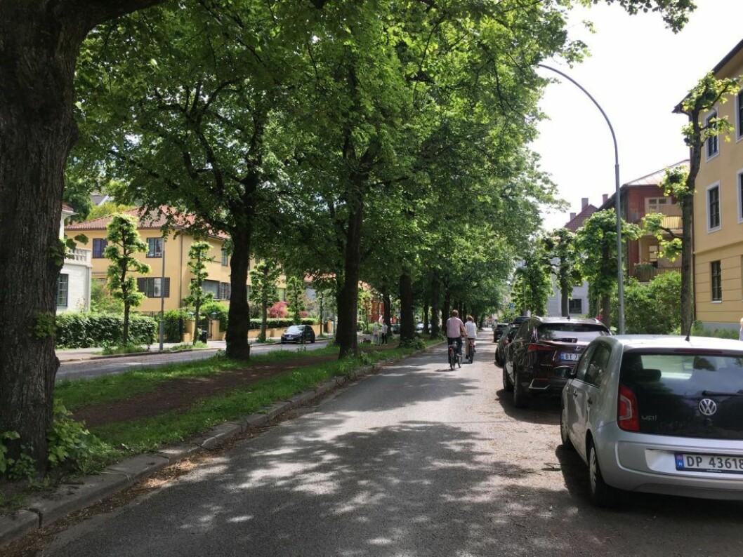 Kan ridealléen benyttes som sykkelsti, spør artikkelforfatteren. Foto: tips@vartoslo.no