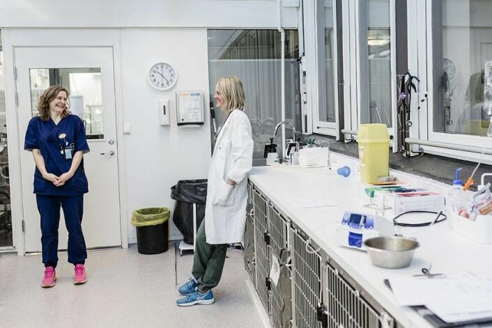 Dyrepleier Lotte Poulsen på Veterinærhøyskolen forteller spesialistkandidat Vanessa Bettembourg om dyrs forskjellige reaksjoner når de våkner av narkosen. Foto: Stine Raastad