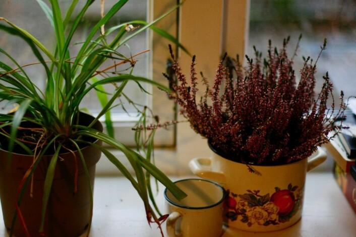 I løpet av den korte tiden i boligen ble rommene fylt med varme og engasjement. Foto: Kamilla Kvamme