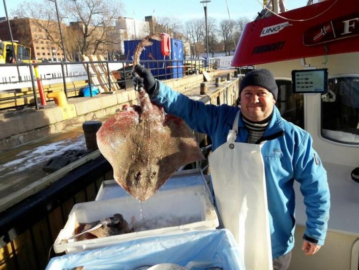 Mange kunder vet at fiskerne har med fangst det kan være vanskelig å finne i fiskeforretninger. Her tilbyr Christian Rochstad ei flott piggskate, fanget på dypt vann utenfor Horten. Foto: Andes Høilund