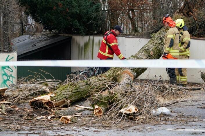 Brann- og redningsetaten var på plass lørdag formiddag og ryddet opp etter at treet veltet på Adamstuen. Foto: Heiko Junge / NTB scanpix