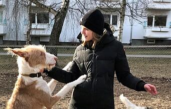 – Vi føler at hundene trenges ut av bybildet på St. Hanshaugen og sliter med å finne plass til dem