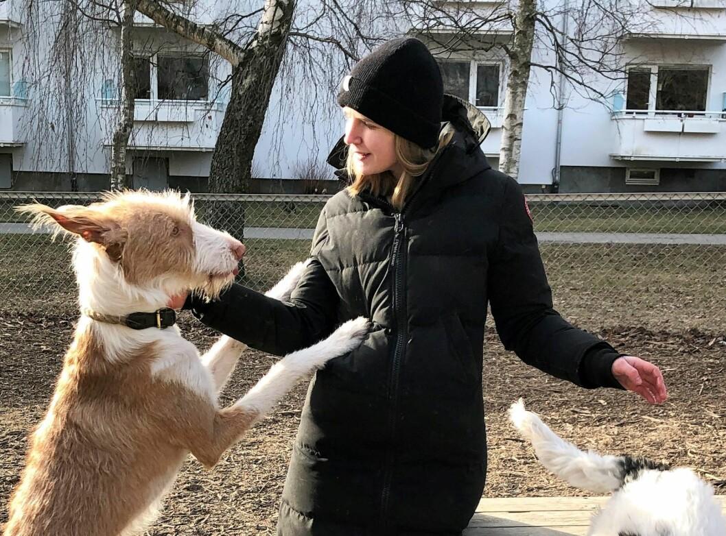 Iladalen hundepark er en av de få hundeparkene på St. Hanshaugen. Her lufter Frida Eggum Jakobsen sitt familiemedlem. Foto: Hans Bastian Borg