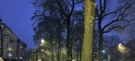 – Sykkelfelter i Gyldenløves gate er et hån mot beboerne her