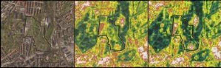 """Før og etter Øyafestivalen: Første bilde er et vanlig kartutsnitt. Bilde to (midten) er før 12. august, mens bilde tre er etter 22. august når festivalen er ferdig. Det røde og hvite i bilde tre viser slitasjen i parken. <span class=""""_3oh- _58nk"""">Foto: Geodata, Sentinel-2, NDVI Colorised</span>"""