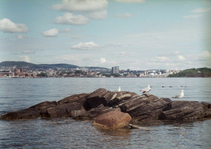 Bleikøya er hekkeparadis for flere sjøfugler. Foto: Andrea Addante