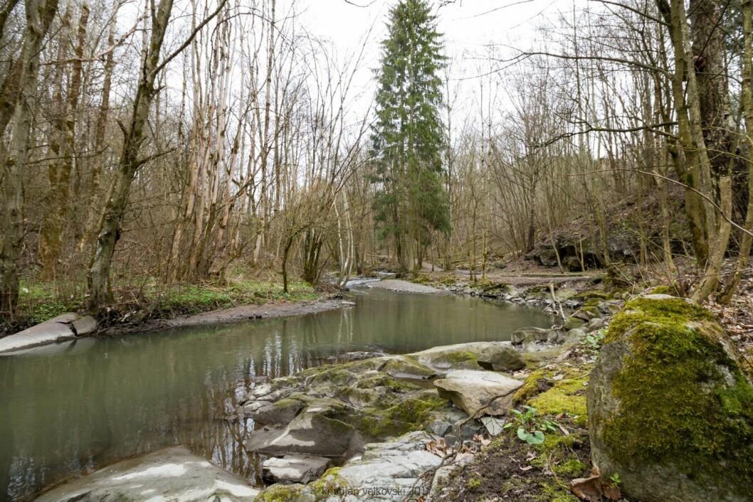 Det er idyllisk nede i Svardalsparken, men stadige giftutslipp tærer på dyrelivet i og rundt elva Foto: Kristijan Velkovski