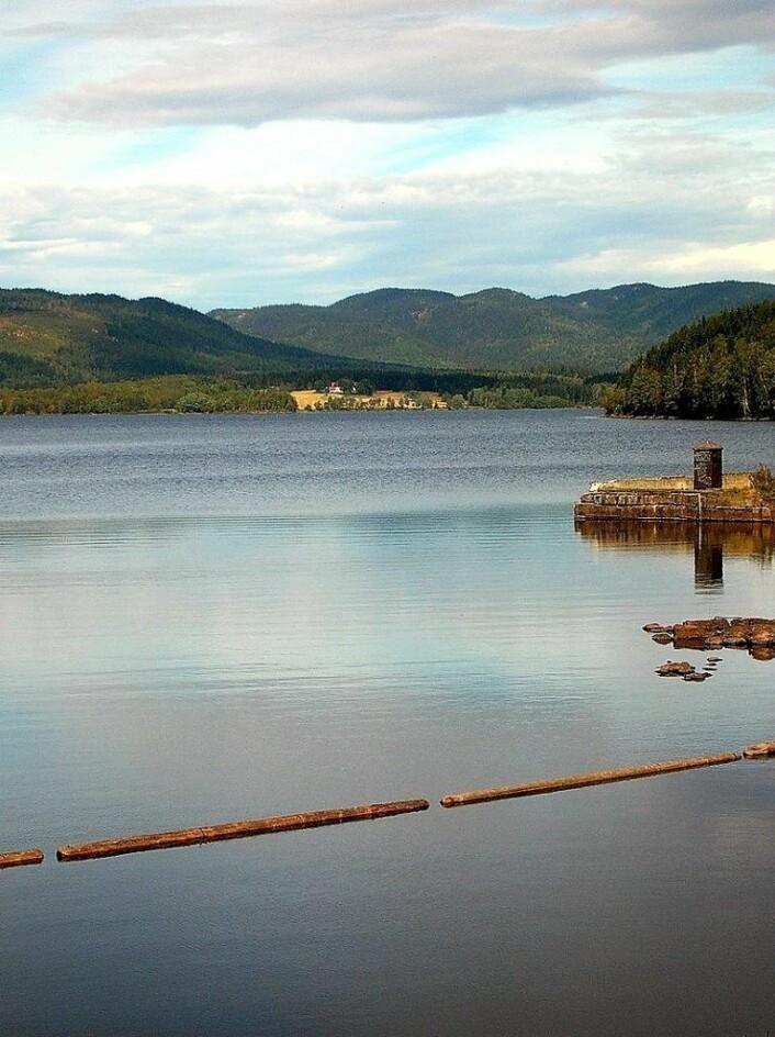 Maridalsvannet ved Oset renseanlegg. Foto: Wikipedia