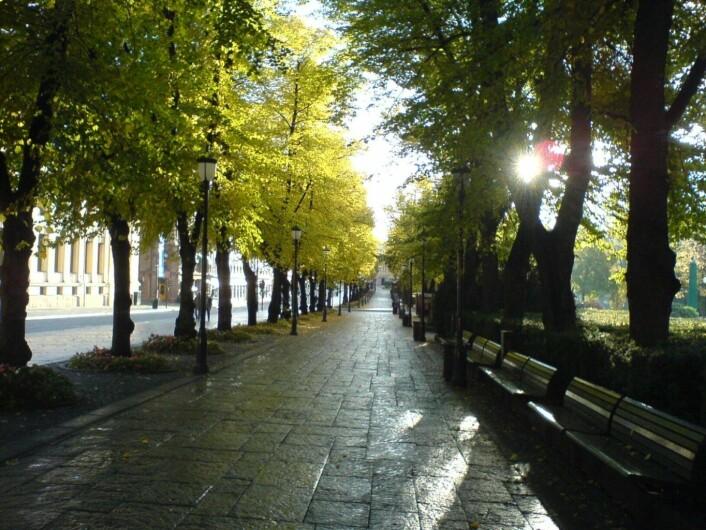 Steinhellene langs Karl Johans gate er mange steder i ferd med å gå helt i oppløsning. Illustrasjonsfotro: Wikimedia