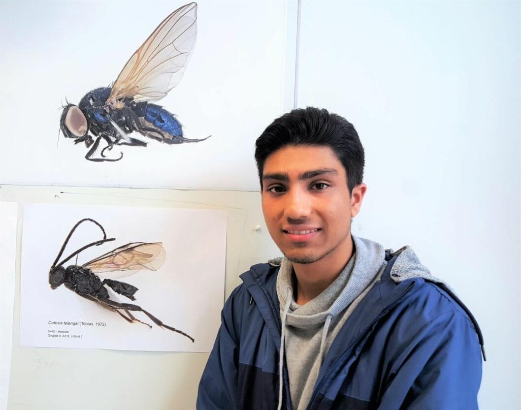 Seks elevgrupper ved Hersleb skole jobbet med prosjektet. Ahmed Rajas (18) elevgruppe oppdaget alle tre av årets nye insektarter. Den nederste fluen i bildet er en av disse tre. Den øverste ble oppdaget av en annen gruppe i fjor. Foto: Tarjei Kidd Olsen