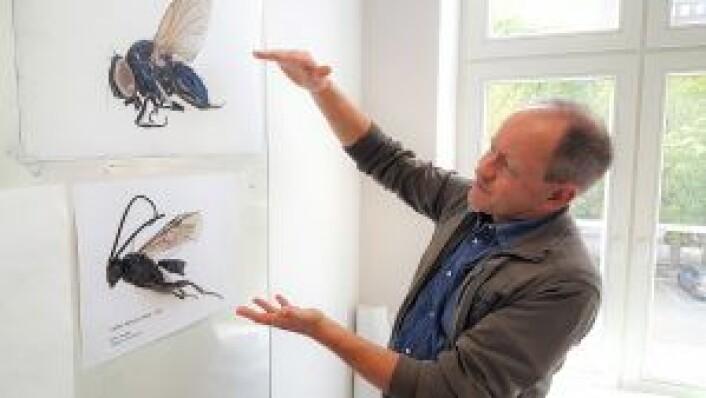 Entomolog og norsk Indiana Jones, Geir Søli fra Naturhistorisk museum, forklarer den avanserte teknikken han brukte for å ta disse insektbildene. Insektene må prepareres for fotografering, og bildene tas med stackingteknikk. Bildet er tatt i biologiklasserommet på Hersleb skole. Foto: Tarjei Kidd Olsen
