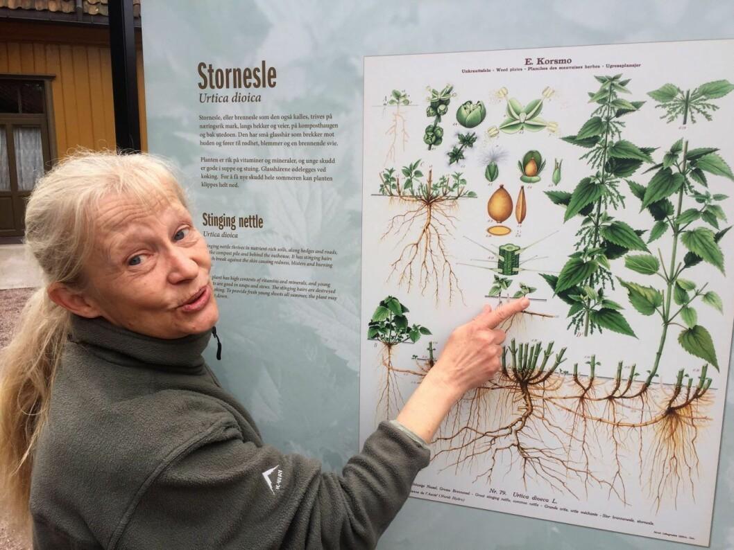 Botaniker Kristina Bjureke har laget tekstene til den nye ugressutstillingen i Botanisk hage. Foto: Vegard Velle