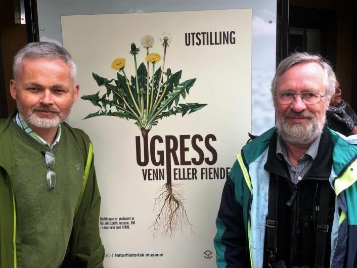 Kommunikasjonsrådgiver Erling Fløistad og Forsker Helge Sjursen har jobbet i over 15 år med ugressplansjene til Emil Korsmo. Foto: Vegard Velle