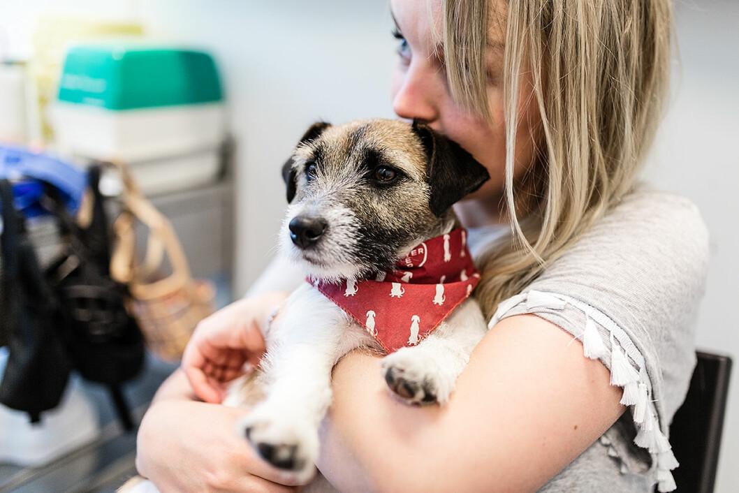 Julia Ansnes og hennes Jack Russell terrier Pippi har hatt det tøft, men nå er Pippi i sitt gamle jeg, selv om giften blir lenge i hundekroppen. Foto: Stine Raastad