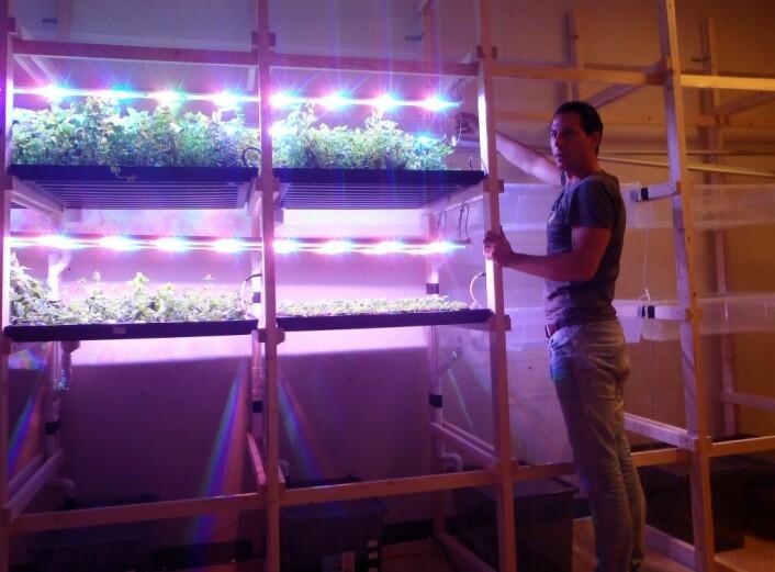 BySpire-tekniker Dirk-Jan van Lubek ved plantekassene. Her har han full kontroll på lys, temperatur, næring og vann til plantene. Foto: Anders Høilund