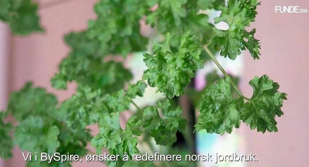 BySpire vil starte et urbant landbruk i Oslo, men er det en hype? Foto: Skjermdump fra funde.no