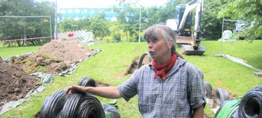 I dag ble skulpturen Tors bukker montert i Torshovdalen