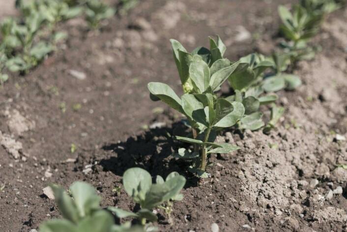 I parsellhagene dyrkes grønnsaker og blomster. Foto: Kikkut kommunikasjon