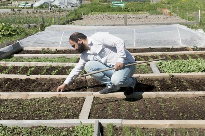 Mange kommer til parsellhagene både for dyrking og det sosiale. Foto: Kikkut kommunikasjon
