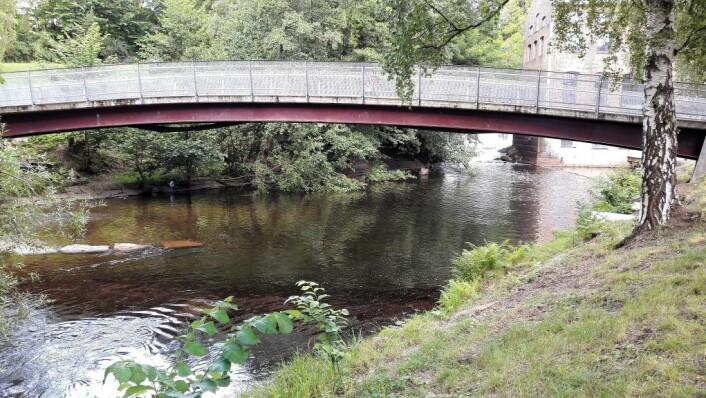 Under Kjærlighetsbrua ved Øvre Foss danner laksen par og gyter. På senhøstes kan du se fra broa hvordan fiskene oppvarter hverandre. Foto: Anders Høilund