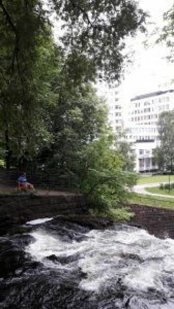 Fossheim, heimen ved fossen. Fossen og lyden av strømmende vann viktig for området. Foto Anders Høilund