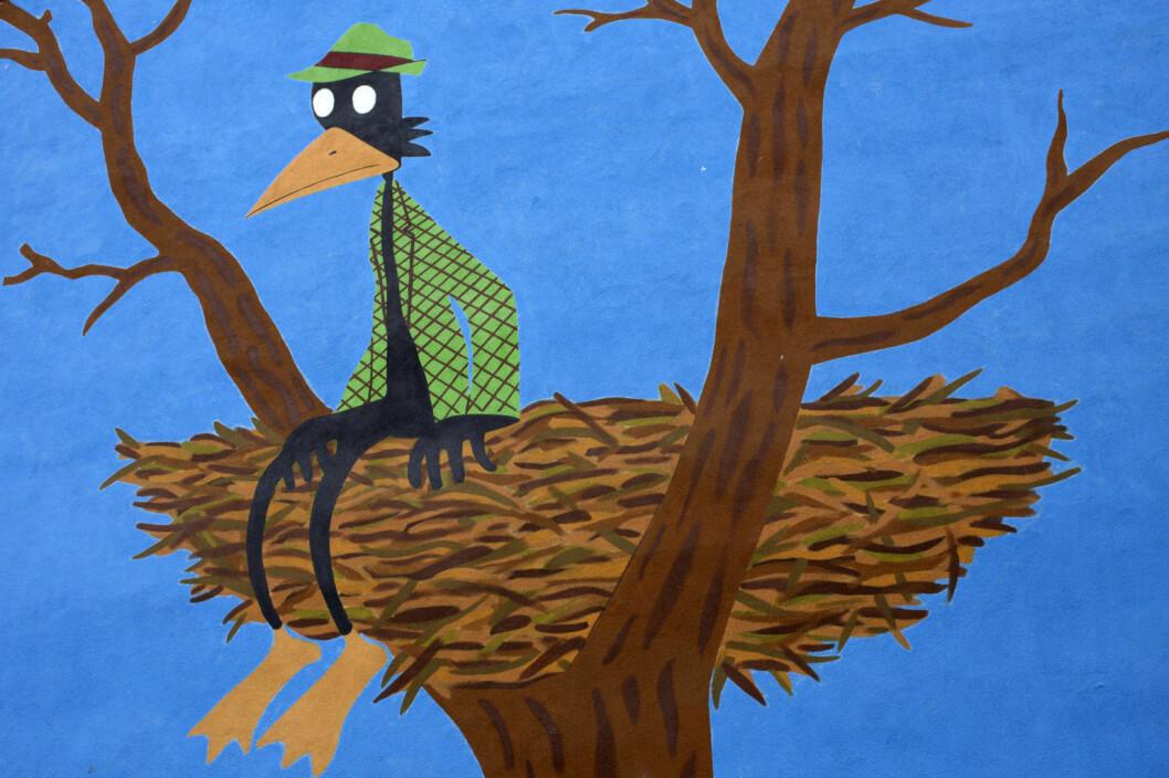 Fuglemannen sitter på kanten av reiret og betrakter verden. Foto: Merethe Ruud