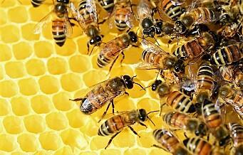 – Biene ville stemt grønt