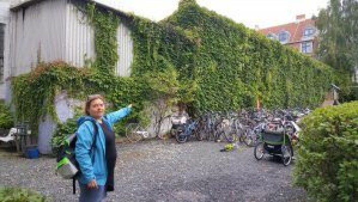 Styreleder Håkonsen peker ut garasjen nærmest bakgården til de ti sameiene. Foto: Tarjei Kidd Olsen