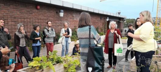 Nabolagshager feiret bybondefest på Oslos nye takhage: Tak for maten