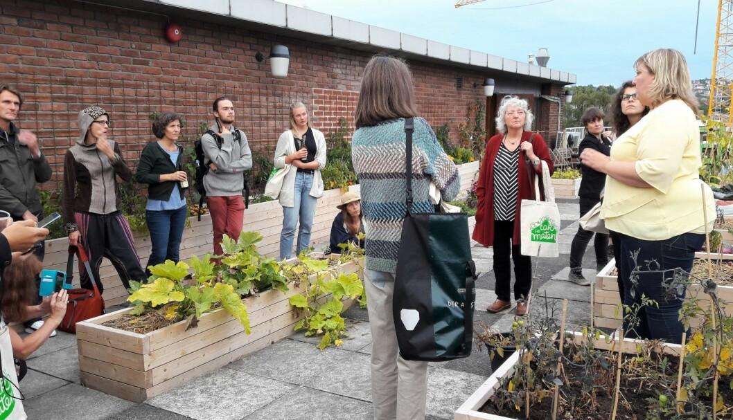 Det er ikke alt som spirer og gror på taket på Greenhouse på Grønland. Helene Gallis i Nabolagshager forteller om erfaringer fra første sesong. Foto: Anders Høilund