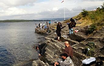 Oslofjorden sliter og torsken forsvinner. –Vi trenger en helhetlig plan for bruken av fjorden
