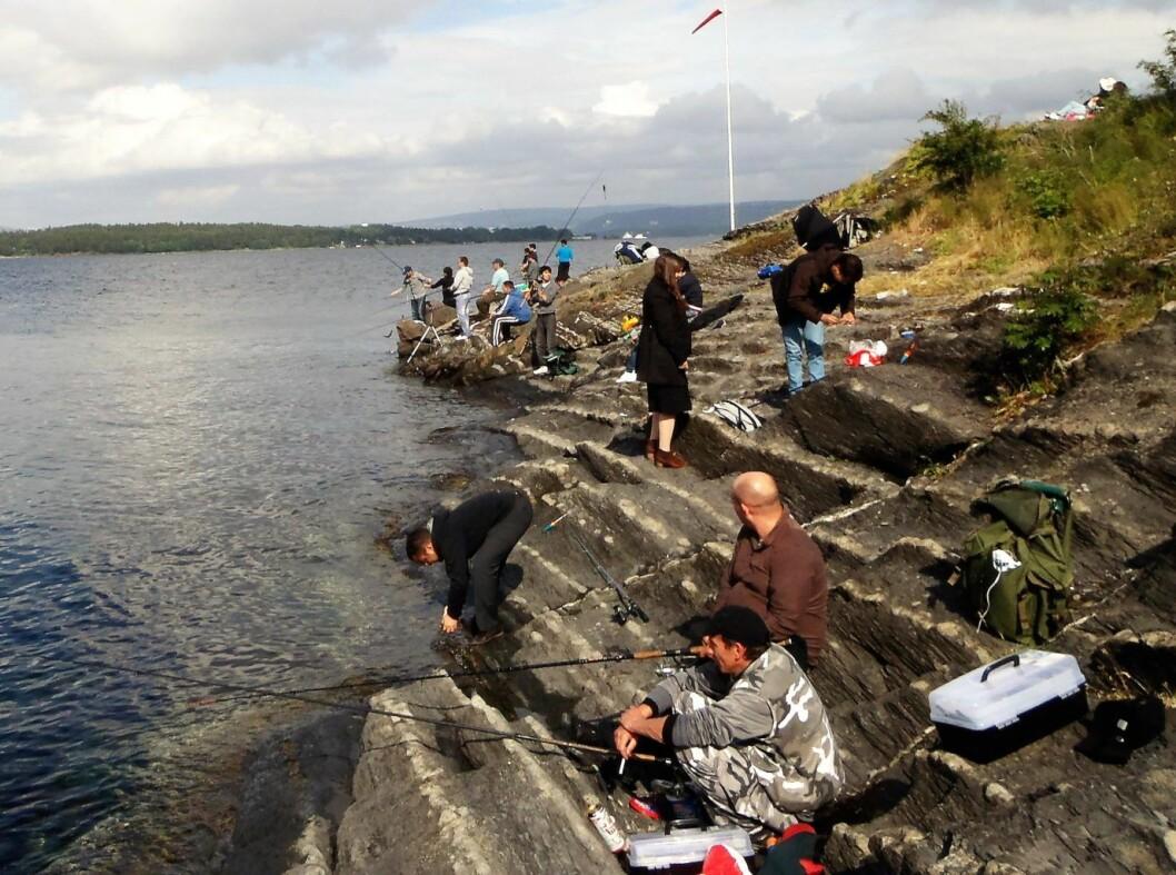 Makrellfiske i Indre Oslofjord er populært. Det er ikke få fiskemiddager som blir som blir hentet opp fra fjorden hver sommer. Foto: Anders Høilund
