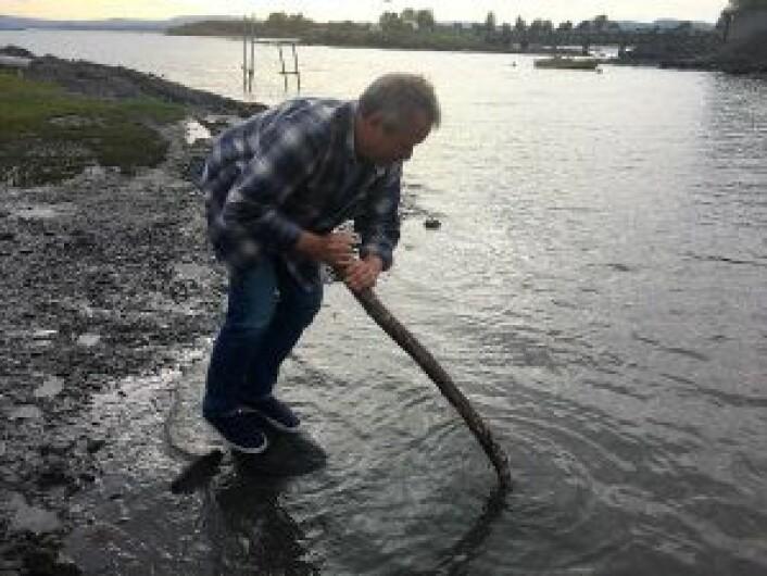 Styreleder Lars Askholt i Lindøya vel demonstrerer hvor gjørmete det er på strendene på Lindøya, og hvor lett det er å synke ned. Foto. Tarjei Kidd Olsen