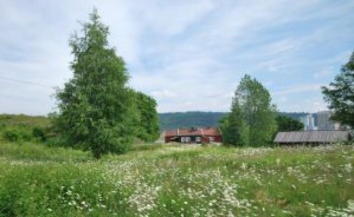 Osloøyenes eneste gård, Bleikøyplassen, finnes nord på Bleikøya og har vært bebodd av samme familie siden tidlig på 1700-tallet. Den ønsker byrådet å regulere til bevaring. Foto: Helge Høifødt / Creative Commons